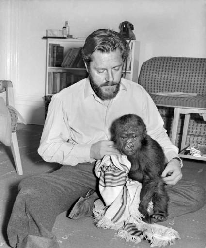 durrell chimpance